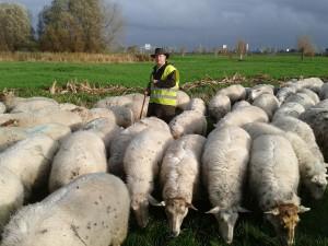141113_adriaan_schapen